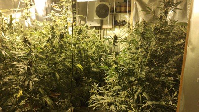 Pla general de l'habitació on es va trobar la marihuana a la finca de Palafrugell aquest dimecres 5 de novembre de 2020. (Horitzontal)