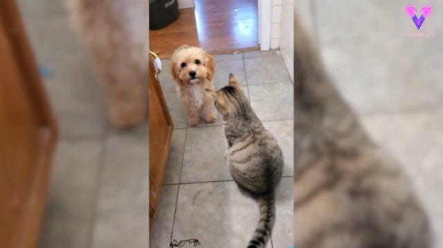 Un cachorro llama a un perro más grande para que lo defienda de un gato y la cómica escena quedó registrada en vídeo