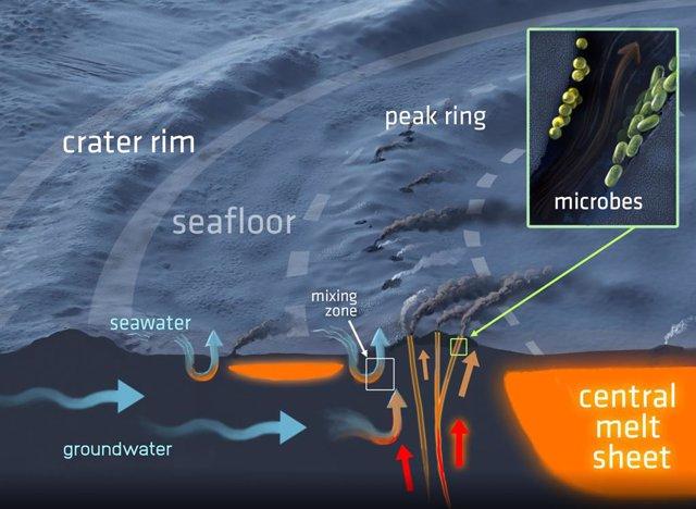 Una sección transversal tridimensional del sistema hidrotermal en el cráter de impacto de Chicxulub y sus respiraderos del fondo marino. El sistema tiene el potencial de albergar vida microbiana.