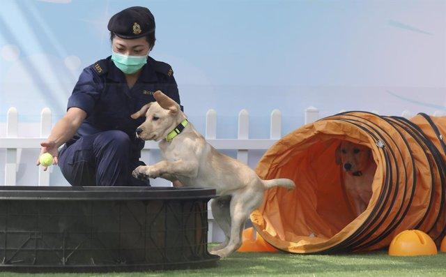Entrenamiento canino en un centro de Hong Kong.