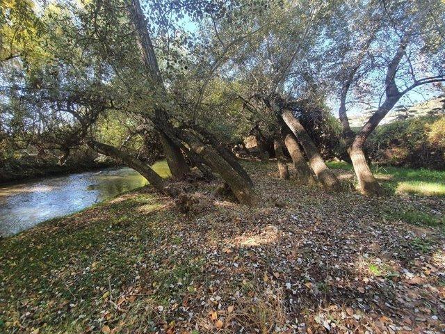 Ribera del Guadalquivir en la que se adecua el sendero.