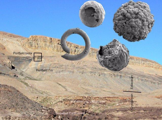 Fosiles retrasan la aparición de animales en la Tierra a hace 570 millones de años