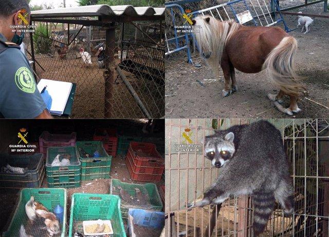 La Guardia Civil Desmantela Un Núcleo Zoológico Clandestino Con 572 Animales En Lorca