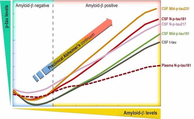 El gráfico muestra los canvios de los nuevos biomarcadores p-tau (p-tau181, 271 i 231) a medida que se acumula la proteína beta-amiloide al cerebro en la fase preclínica del Alzheimer