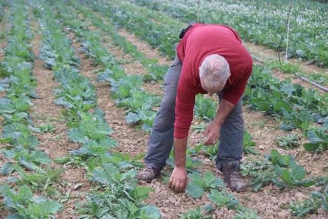Pla mitjà d'en Joan Coll, un dels pagesos que participa en la iniciativa de Xarxa Pagesa al seu camp a Albons aquest divendres 6 de novembre de 2020. (Horitzontal)