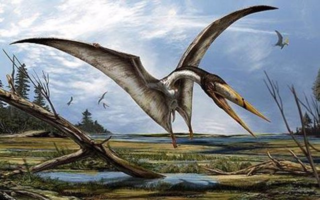 Los pterosaurios con este tipo de picos son más conocidos en el período de tiempo del norte de África, por lo que sería razonable asumir una semejanza con el Alanqa del norte de África.