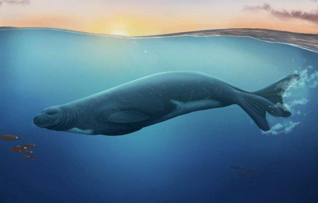 Una impresión artística de la especie de foca monje extinta recién descubierta