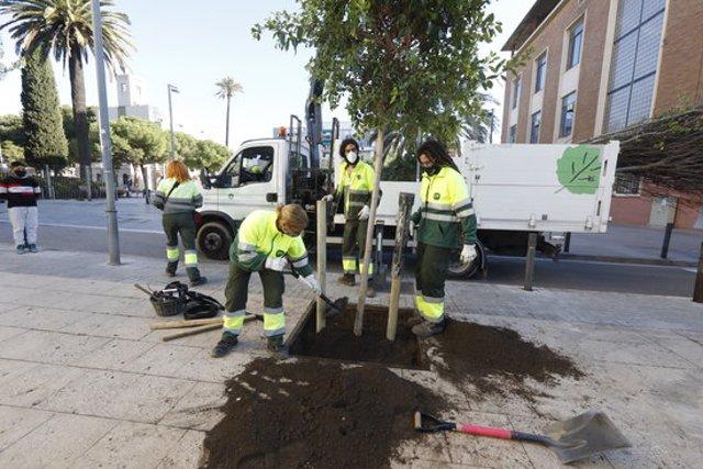 Imatge d'uns operaris plantant un arbre. (Horitzontal)