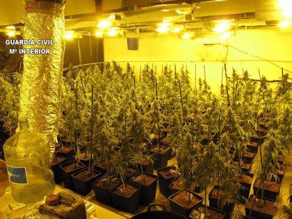 Dos detenidos en Seseña por cultivo de marihuana y defraudación de fluido eléctrico