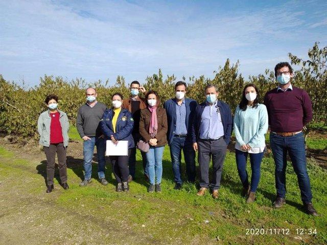 Delegación de Brasil y técnicos de Extremadura visitan un cultivo de ciruelas.