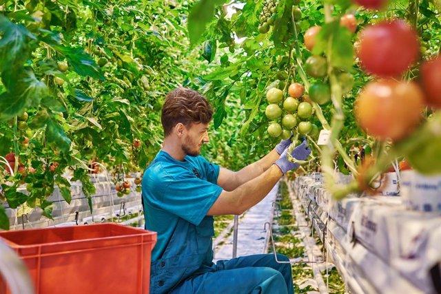 Foto de recurso de agricultor.