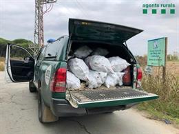 Pla general de la furgoneta dels denunciats per recollir pinyes sense permís ni llicència al Delta del Llobregat. Imatge del 14 de novembre del 2020 (Vertical)