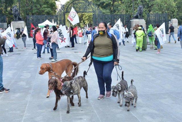 Una mujer pasea a unos perros por las calles de Ciudad de México, mientras tiene lugar una manifestación contra el Gobierno.