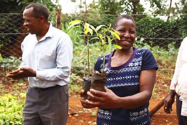 Una mujer acaba de recibir los árboles para plantar