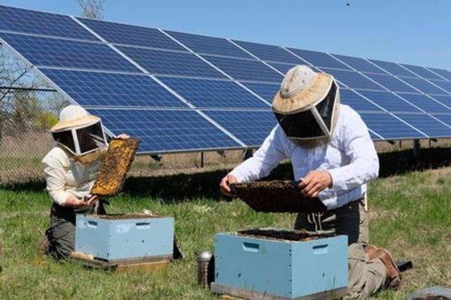 Endesa busca 'apicultores solares' en sus plantas de Carmona