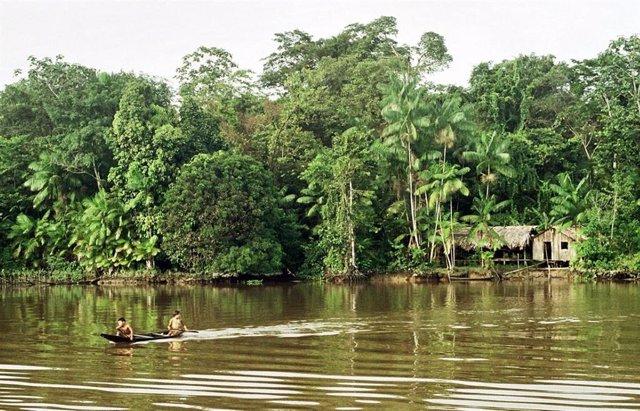 Imagen de archivo de la Amazonía.