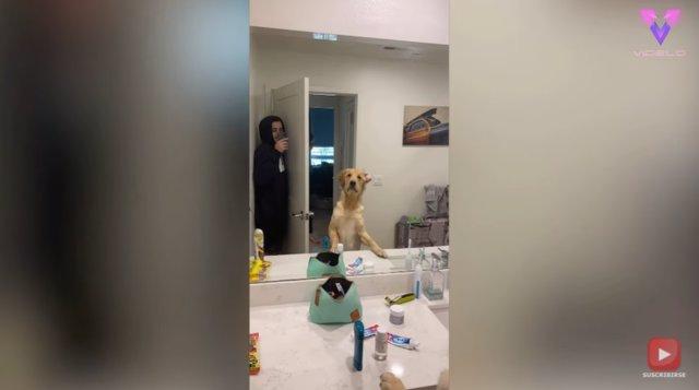 La confusión de este perro con el reflejo de su dueño en el espejo mientras juega al escondite se gana al público en Internet