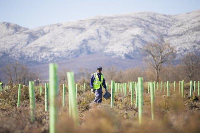 Proyecto de reforestación de la Fundación Repsol