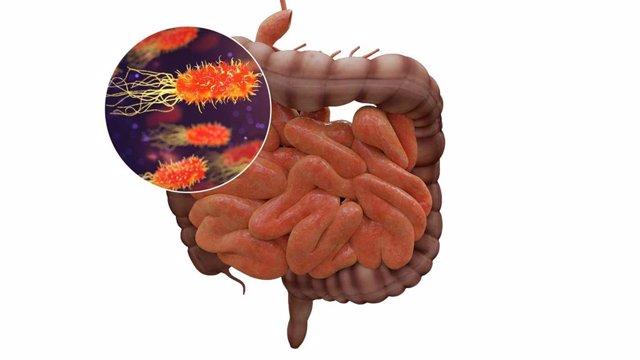 El microbioma intestinal puede influir en el riesgo de sufrir infecciones y en la respuesta defensiva frente a las mismas.