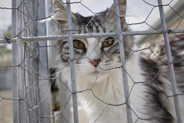 Un gato observa a través de una verja.