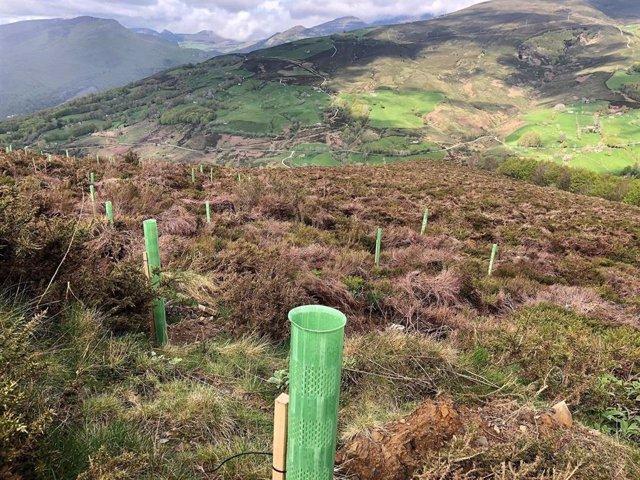 Plantación de árboles en la provincia de Palencia.