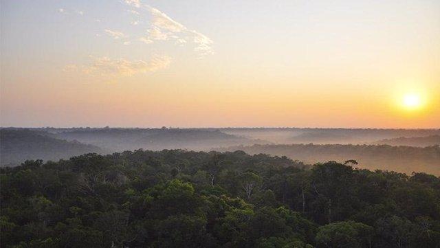 Salida del sol sobre la selva amazónica (tomada desde la parte superior del sitio de la torre de flujo K34 ubicada a 60 km al norte de Manaos, Brasil).