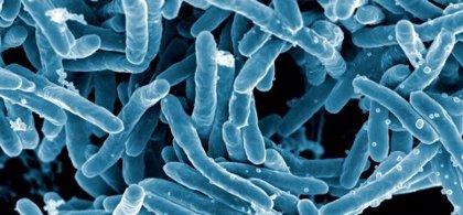 Un nuevo estudio relaciona la vacuna contra la tuberculosis con un menor riesgo de contraer COVID-19