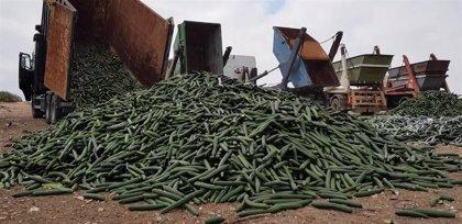 El sector hortofrutícola de Almería y Granada retira del mercado el 30% del pepino ante la crisis de precios