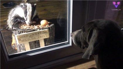 DESCONECTA.-Wild West Wildlife Cafe, la cafetería instalada en el jardín de una casa donde acuden a comer todo tipo de animales