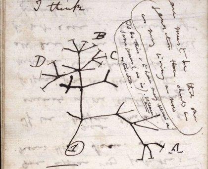 El árbol de la vida que dibujó Charles Darwin se da por robado