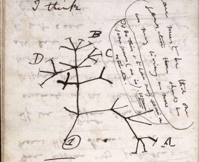 Imagen del árbol de la vida dibujado por Darwin en un cuaderno de notas que probablemente ha sido robado de la Universidad de Cambridge