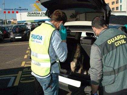 La Guardia Civil interviene 1,4 kilos de cocaína en un coche en Igualada (Barcelona)