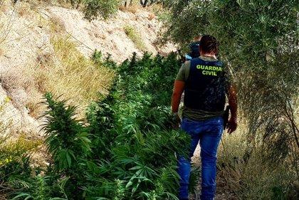 Desarticulada una red a la que se atribuye el mayor centro de marihuana de la Alpujarra de Granada