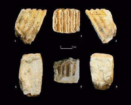 Un proyecto registra los fósiles descubiertos en 82 yacimientos arqueológicos de la península