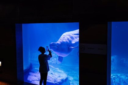 El Oceanogràfic celebra dos 'Ocean days' con entradas a 18 euros