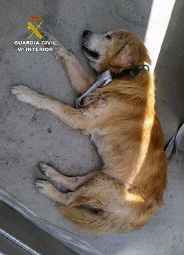 Imagen del perro enfermo abandonado en un polígono industrial de Cieza