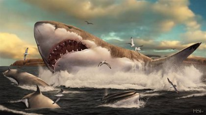 El Instituto Cavanilles de la UV describe una nueva zona de cría del tiburón gigante prehistórico megalodon