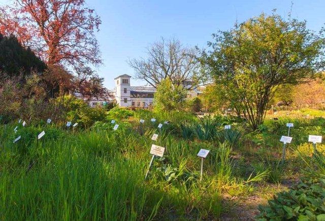 Leipzig alberga el jardín botánico más antiguo de Alemania. En un área de solo tres hectáreas, alrededor de 6500 de las 350,000 especies de plantas en todo el mundo crecen allí.
