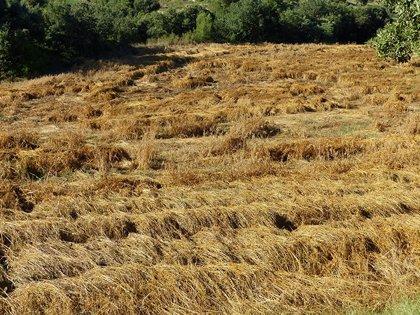 Unió de Pagesos afea que el proyecto del AMB en el Parque Agrario no escucha el sector