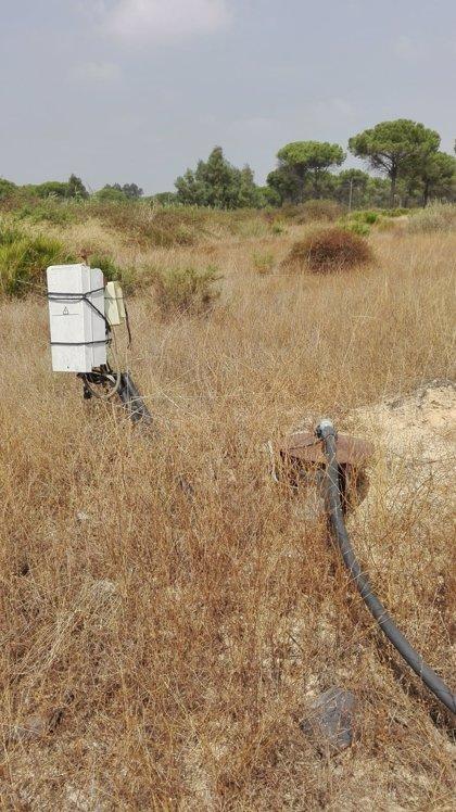 CHG anuncia el cierre de 170 pozos en el entorno de Doñana tras la concesión para riego de 318 hectáreas de El Fresno