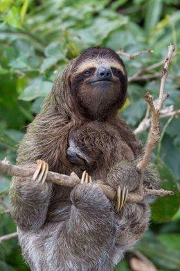 ClimatePartner, lavera is protecting 5,023 ha of rain forest in the Amazon region Peru Madre de Dios