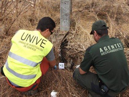Junta y SEO/BirdLife forman a más de 1.000 agentes en investigación sobre delitos contra la biodiversid