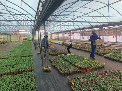 La Diputación de Cáceres comienza el reparto de 20.000 plantas ornamentales de invierno