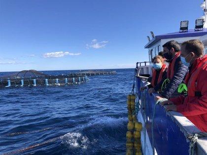La Comunidad abre el plazo de ayudas al sector de la acuicultura para atenuar el impacto del Covid y la DANA de 2019