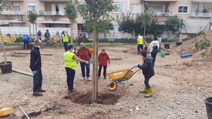Los vecinos de Son Dameto siembran 18 árboles en el solar situado en la calle Andreu Jaume i Nadal