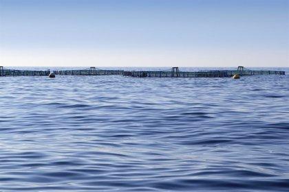 Un estudio plantea dudas sobre los efectos del pescado de acuicultura en el estado de los ecosistemas oceánicos