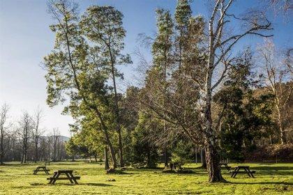 Mare reforzará la biodiversidad de La Viesca eliminando los árboles dañados