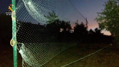 Desactivan nueve puntos de caza ilegal del zorzal en Adamuz y Montoro (Córdoba)