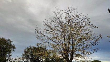El tiempo en Extremadura para hoy lunes, 30 de noviembre de 2020