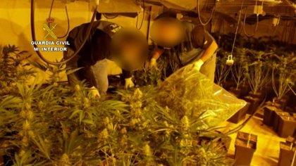 Treinta detenidos en la operación en Granada contra la organización que distribuía marihuana a Europa